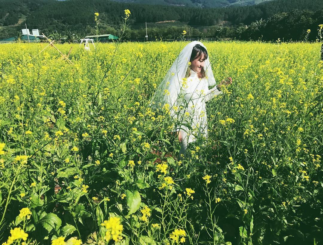 Cánh đồng hoa Cải Vàng Đà Lạt