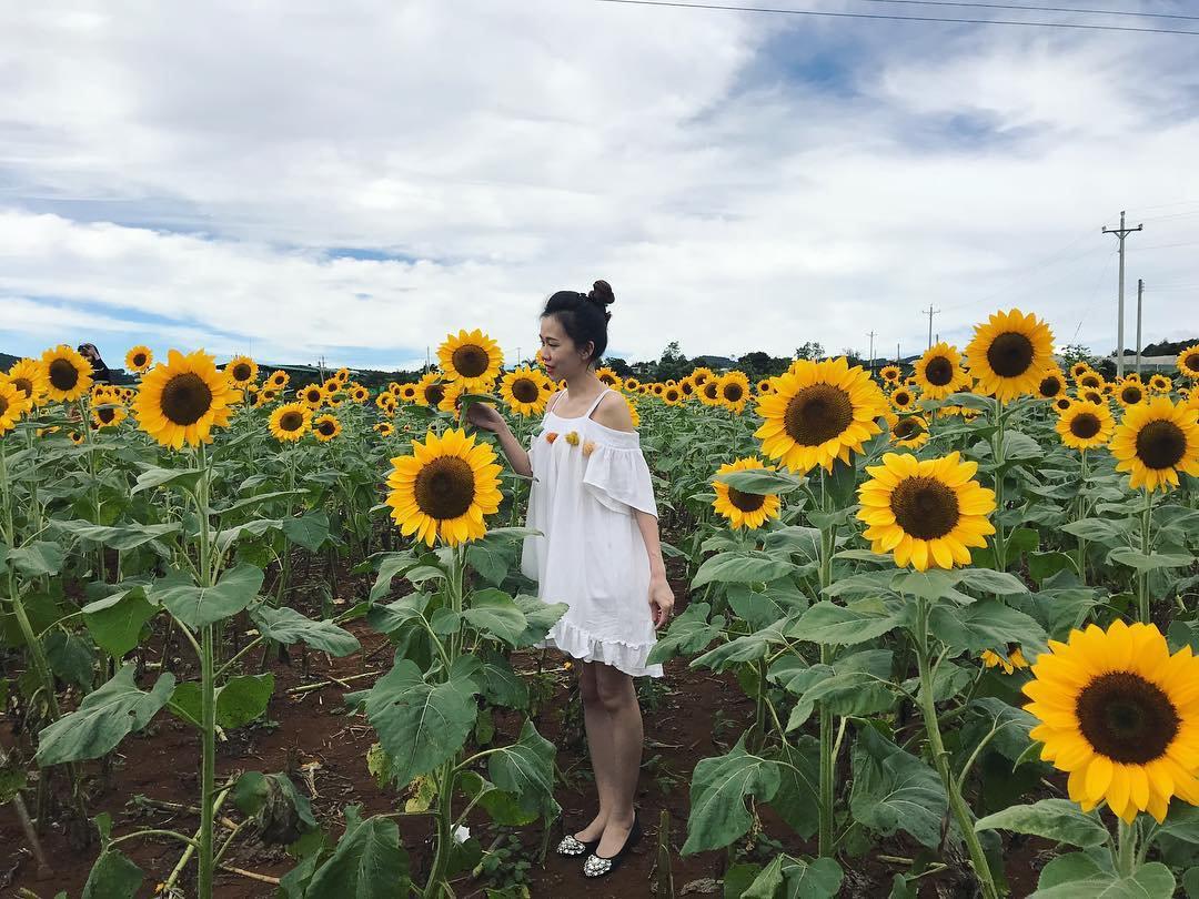 Vườn hoa hướng dương Đà Lạt 2018